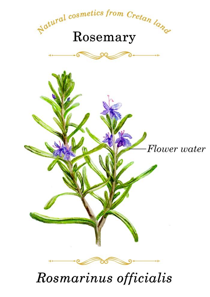 Aura kritis - natural cosmetics from Creatan land
